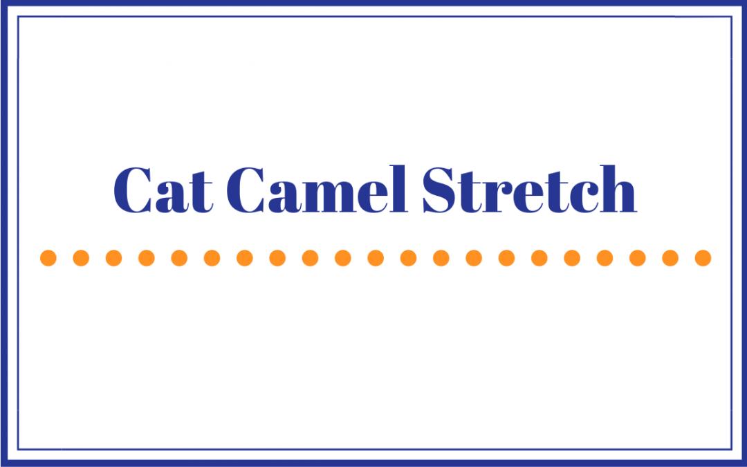 Cat Camel Stretch