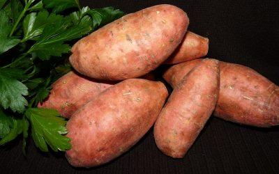 Spotlight on Sweet Potatoes